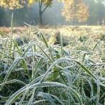На Буковині очікуються заморозки 21 04 2018