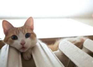 отопление-котик