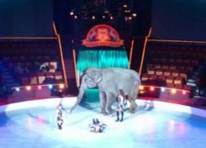 цирк будапешт