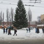 Головну ялинку привезуть до Чернівців 6-7 грудня